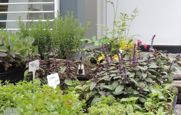 GREAT SELECTION OF HERBS AND CULINARY PLANTS